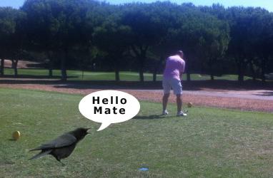 crow-talk